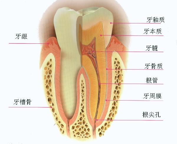 补牙、根管治疗